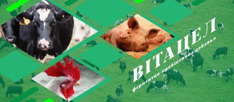 «Вітацел» використовується як кормова добавка для великої рогатої худоби, телят, свиней, овець, кіз, курей і гусей.